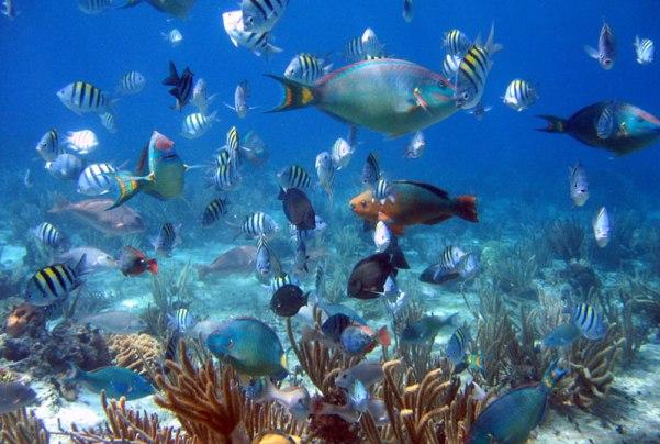 cozumel-peixes