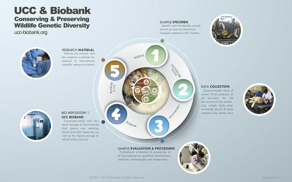 infographic-1200